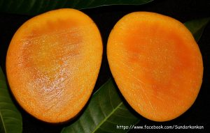 Alphonso Mango | Fruits in Konkan